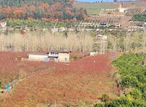فروش زمین 200 متر تنگه لته (کولا) در شیپور-عکس کوچک