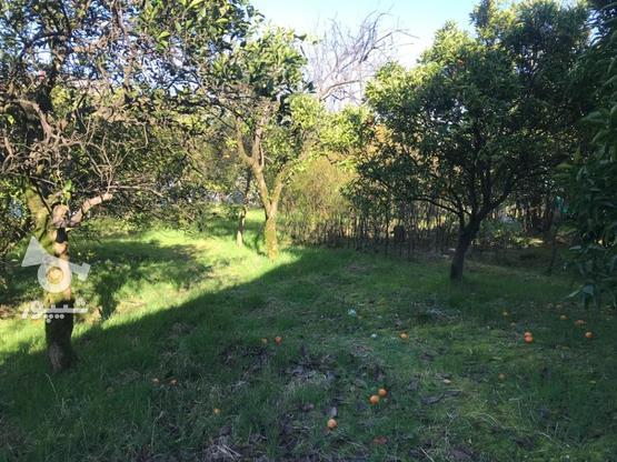 فروش زمین مسکونی 1400 متر در نشتارود در گروه خرید و فروش املاک در مازندران در شیپور-عکس6
