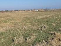 فروش زمین کشاورزی 3000 متر در قائم شهر جاده جویبار در شیپور