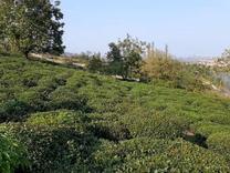 فروش زمین مسکونی 4560 متر در تنکابن در شیپور