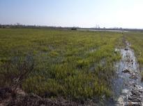 زمین باغی 1900 متری سند دار در آمل در شیپور-عکس کوچک