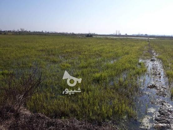 زمین باغی 1900 متری سند دار در آمل در گروه خرید و فروش املاک در مازندران در شیپور-عکس1