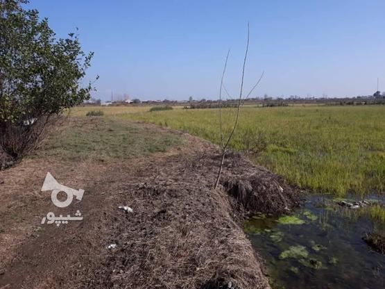 زمین باغی 1900 متری سند دار در آمل در گروه خرید و فروش املاک در مازندران در شیپور-عکس2