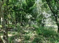 باغچه 330 متری سنددار در شهریار در شیپور-عکس کوچک