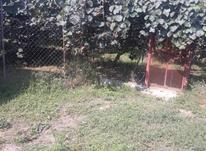 1500 متر باغ خرمالو کیوی در شیپور-عکس کوچک