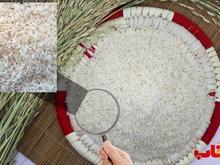 برنج هاشمی عطری گیلان ارزان و بدون واسطه در شیپور