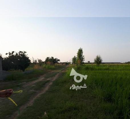 زمین کشاورزی 3700 متری در مرزون آباد  در گروه خرید و فروش املاک در مازندران در شیپور-عکس1