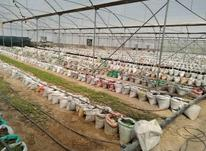 اجاره دامداری و کشاورزی 2000 متر در پنج تن آل عبا در شیپور-عکس کوچک