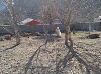 فروش زمین ییلاقی مسکونی 500 متر در آمل در شیپور-عکس کوچک