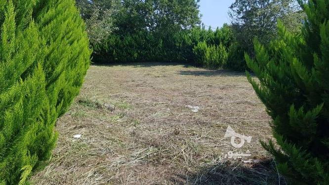 فروش زمین مسکونی 390 متر در رویان سیاهرود در گروه خرید و فروش املاک در مازندران در شیپور-عکس2