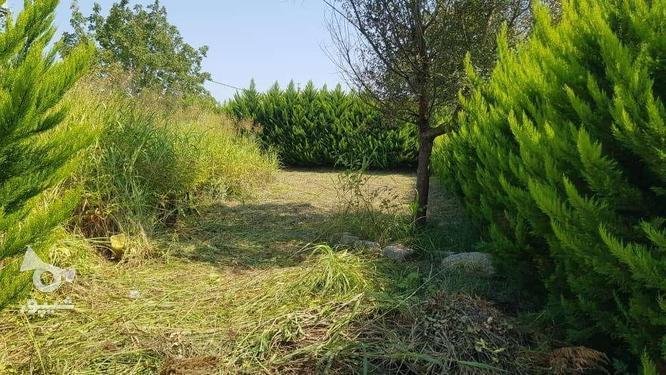فروش زمین مسکونی 390 متر در رویان سیاهرود در گروه خرید و فروش املاک در مازندران در شیپور-عکس1