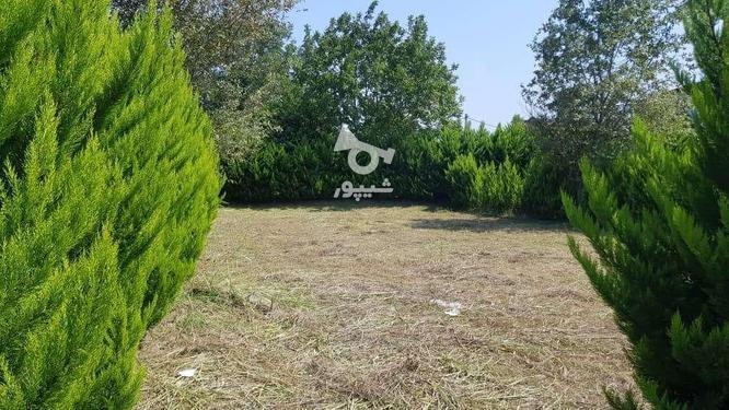 فروش زمین مسکونی 390 متر در رویان سیاهرود در گروه خرید و فروش املاک در مازندران در شیپور-عکس4