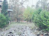 شمال فروش زمین جنگلی هراز پلاک1جنگل230مترشهرکی در شیپور-عکس کوچک