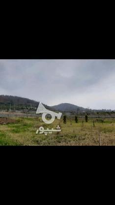 ملک ویو جنگل در گروه خرید و فروش املاک در مازندران در شیپور-عکس2