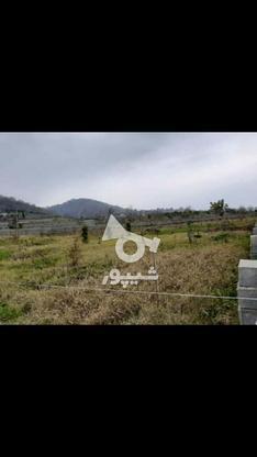 ملک ویو جنگل در گروه خرید و فروش املاک در مازندران در شیپور-عکس3