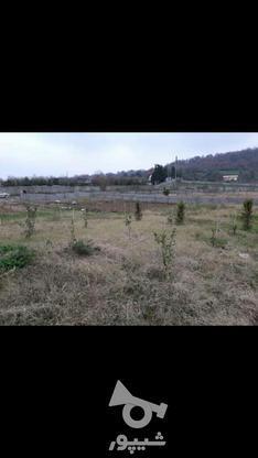 ملک ویو جنگل در گروه خرید و فروش املاک در مازندران در شیپور-عکس4