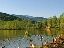 ۱۰۰۰مترزمین طبیعتی بکروبینظیر در شیپور