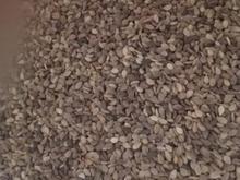 فروش 5تن کنجد بوج جاری شده تمیز در شیپور