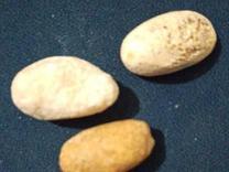 خر مهره اصل به شرط تست  در شیپور