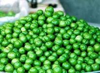 نهال گوجه سبز پیش رس نوکنده پیوندی در شیپور-عکس کوچک