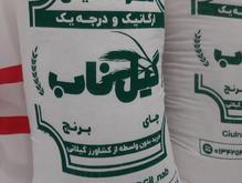 برنج دمسیاه آستانه گیلان (دم سیاه خانواده برنج صدری)  در شیپور