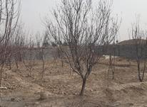 فروش زمین کشاورزی 1300 متر در ملارد در شیپور-عکس کوچک