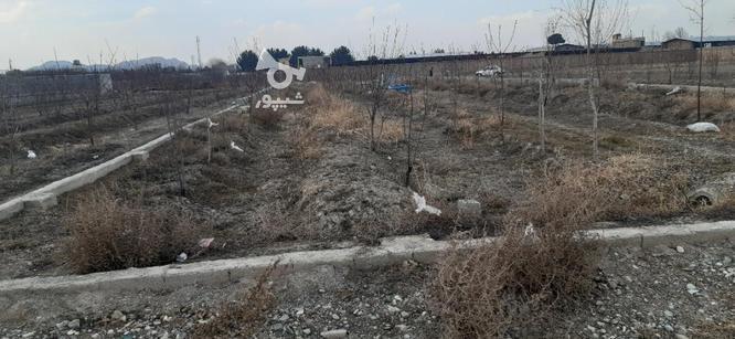 فروش زمین کشاورزی 1150 متر در ملارد در گروه خرید و فروش املاک در تهران در شیپور-عکس6