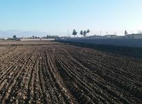 زمین باغی و مسکونی  در شیپور-عکس کوچک