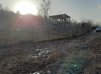 فروش زمین باغی  500 متر در لاهیجان در شیپور-عکس کوچک