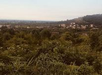 فروش زمین 11هکتاری مناسب برای سرمایه گذاری در تنکابن در شیپور-عکس کوچک