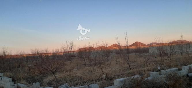 فروش زمین کشاورزی 1050 متر در ملارد در گروه خرید و فروش املاک در تهران در شیپور-عکس4