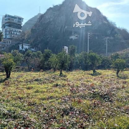 فروش زمین تجاری مسکونی1605 متر در رامسر در گروه خرید و فروش املاک در مازندران در شیپور-عکس1