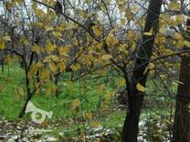 باغچه 514 متر در اندیشه(شهریار) در شیپور