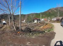 زمین مسکونی 234 مترهمراه پروانه درکتشال لاهیجان در شیپور-عکس کوچک