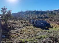 زمین مسکونی 450 مترهمراه پروانه  درکتشال لاهیجان در شیپور-عکس کوچک