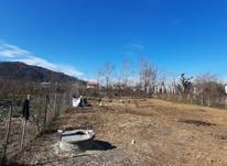 زمین مسکونی 740 متر درکتشال لاهیجان در شیپور-عکس کوچک