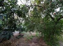 زمین مسکونی 300 متر  در شیپور-عکس کوچک