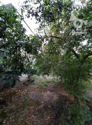 زمین مسکونی 300 متر  در گروه خرید و فروش املاک در مازندران در شیپور-عکس1