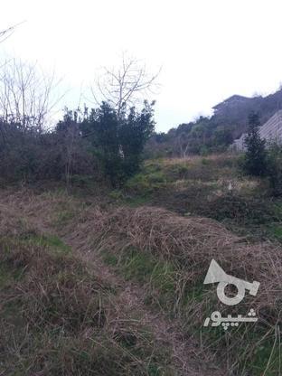 فروش زمین مسکونی 17000 متر در لنگرود در گروه خرید و فروش املاک در گیلان در شیپور-عکس8