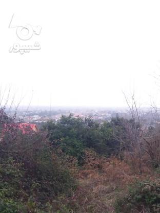 فروش زمین مسکونی 17000 متر در لنگرود در گروه خرید و فروش املاک در گیلان در شیپور-عکس6
