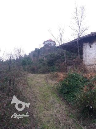 فروش زمین مسکونی 17000 متر در لنگرود در گروه خرید و فروش املاک در گیلان در شیپور-عکس4