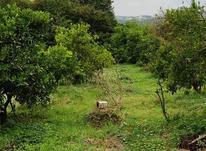باغ 1711 متری پر محصول  شهرودکلا در شیپور-عکس کوچک