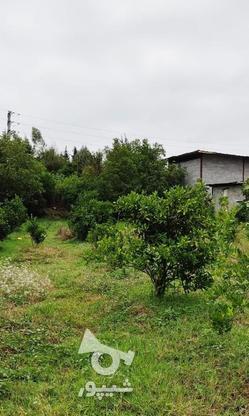 باغ 1711 متری پر محصول شهرودکلا در گروه خرید و فروش املاک در مازندران در شیپور-عکس7