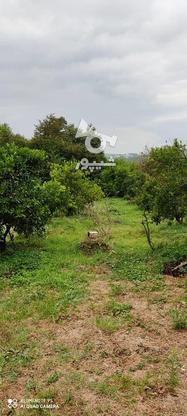 باغ 1711 متری پر محصول شهرودکلا در گروه خرید و فروش املاک در مازندران در شیپور-عکس1