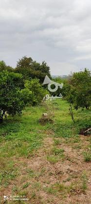 باغ 1711 متری پر محصول شهرودکلا در گروه خرید و فروش املاک در مازندران در شیپور-عکس3
