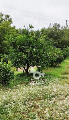 باغ 1711 متری پر محصول شهرودکلا در گروه خرید و فروش املاک در مازندران در شیپور-عکس10