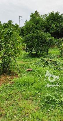باغ 1711 متری پر محصول شهرودکلا در گروه خرید و فروش املاک در مازندران در شیپور-عکس14