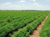 فروش زمین کشاورزی 25000 متر در نظرآباد در شیپور-عکس کوچک