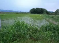 فروش یا معاوضه زمین شالیزار سنتی 1000 متر در کویه در شیپور-عکس کوچک