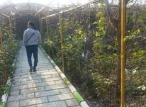 باغ ویلا دوبلکس 1000 متر شهریار در شیپور-عکس کوچک